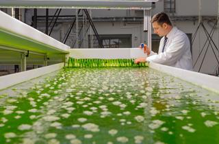 Biotreibstoff aus Algen
