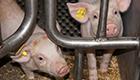Verbot von Reserveantibiotika