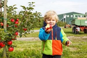 Äpfel schmecken auch den Kleinen richtig gut. © romrodinka/iStock/Thinkstock