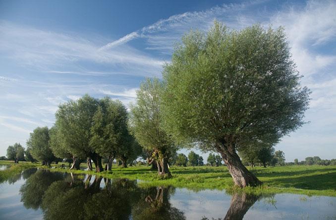 Bäume stehen am Wasser