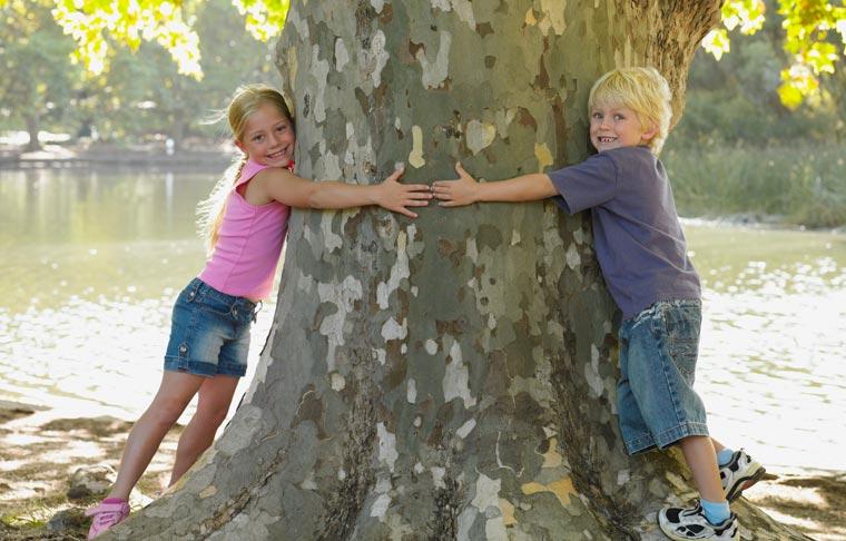 Bäume helfen, das Stadtklima zu verbessern