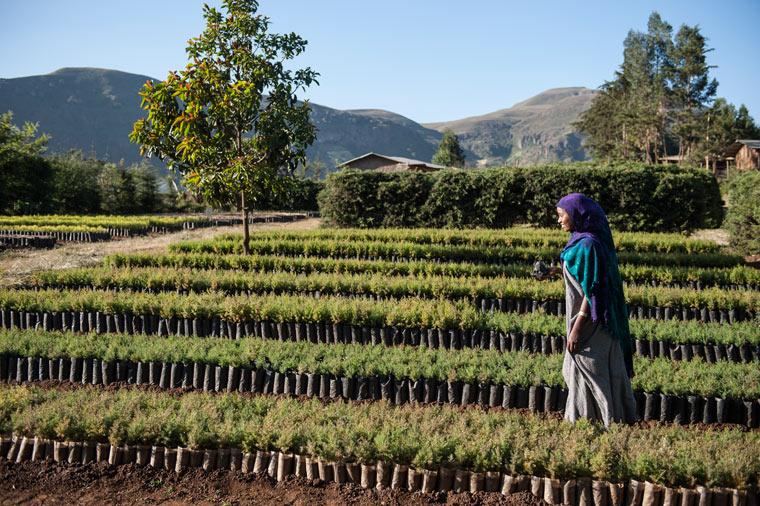 Bäume für Äthiopien - Stiftung Menschen für Menschen macht Äthiopiens Böden wieder fruchtbar