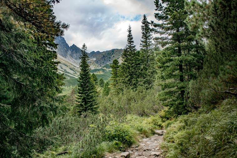 Neue Kooperation zum Schutz des Waldes
