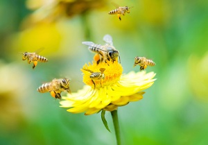 Fipronil Pestizide EU Verbot Bienensterben