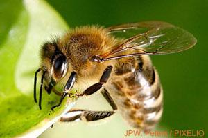 Bienen_Petition