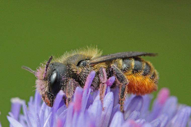 Bienen schützen Wettbewerb zum Schutz der Bienen
