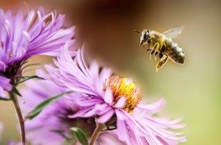 Naturschutz für mehr Bienen und Bestäuber