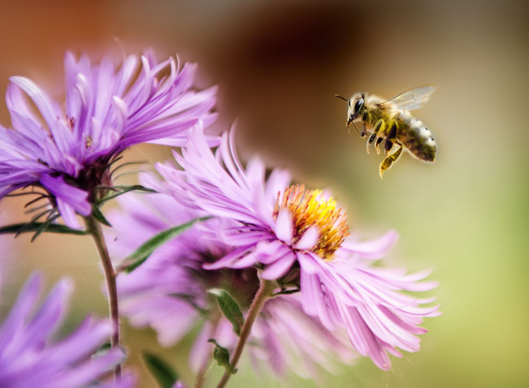 Hessen fördert mit Naturschutzprojekt die Vermehrung von Bienenvölkern