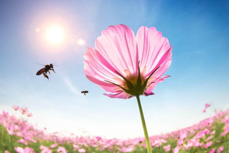 Blühende Vielfalt für bestäubende Insekten