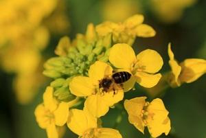 Bienen bestäuben Pflanzen. © baojia1998/iStock/Thinkstock