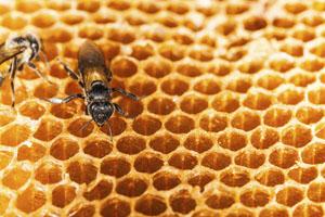 Biowachse wie Bienenwachs könnten in Zukunft Mikroplastik in Kosmetik ersetzen © Bigkhem/ iStock/ Thinkstock
