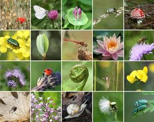 Die Natur ist vielfältig. ©yuelan/iStock/Thinkstock