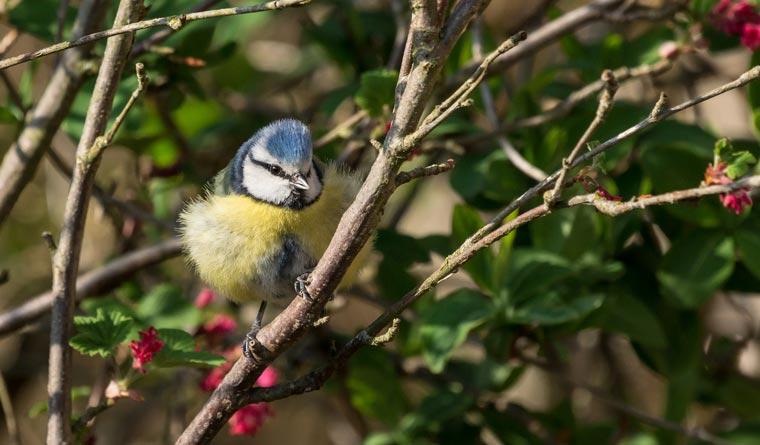 Birdrace ist Vogelbeobachtung und Spendenlauf in einem