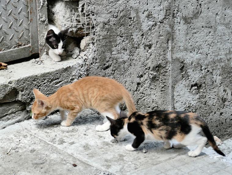 Bulgarien Streunerkatzen