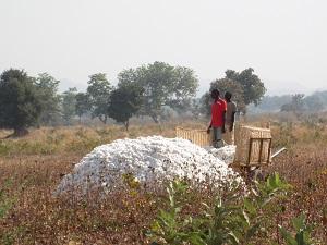 Baumwolle aus Kamerun ©Aid by Trade Foundation