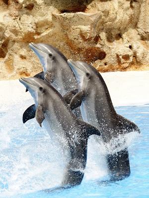WDSF SPD NRW Facebook Delfin