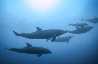 Ölsuche lässt Wale stranden
