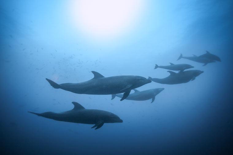 Profitgier der Ölindustrie beeinträchtigt massiv gefährdete Unterwassertierwelt