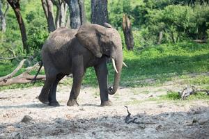 Elfenbein Elefanten