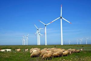 Die Energiewende sollte auch den Artenschutz beachten. © mbears/iStock/Thinkstock