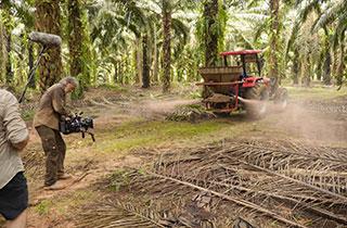 Palmöl-Anbau gefährdet unser Klima