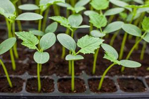 Mit dem revolutionären Projekt einiger Landwirte soll Gen-Saat keine Chance mehr haben © tortoon/ iStock/ Thinkstock