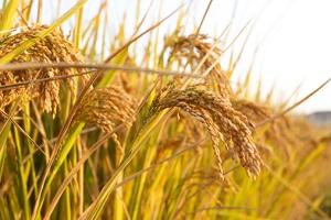 Im Juli beginnt die Getreideernte. © zhudifeng/iStock/Thinkstock
