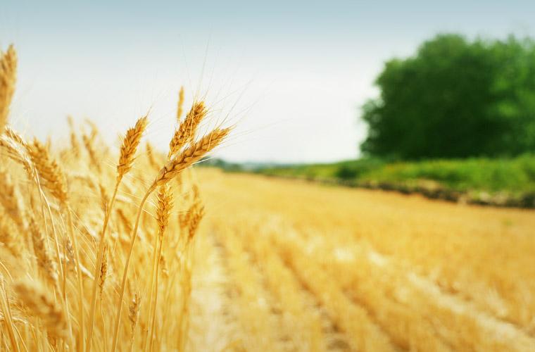 Innovative Landwirtschaft will Ressourcen schonen