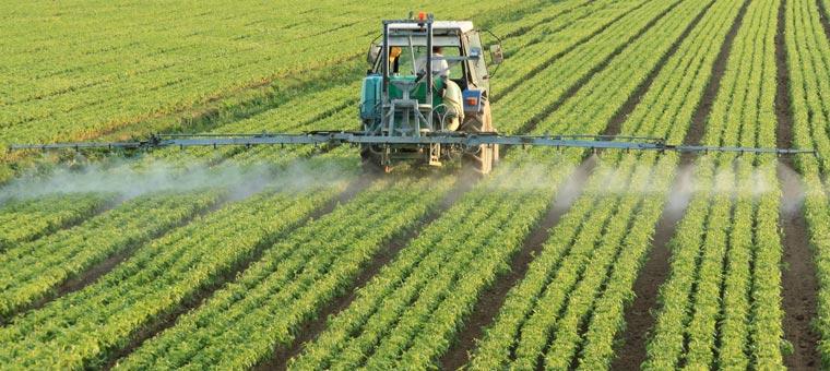 Die Gefahren von Glyphosat für Gesundheit und Umwelt sind bekannt, das Pflanzenschutzmittel wird als krebserregend eingestuft.