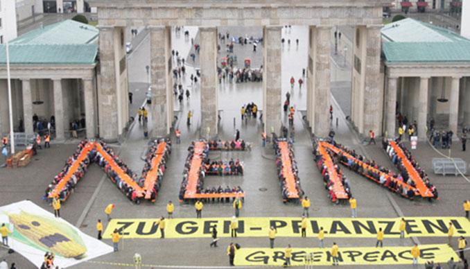 Auch Greenpeace sagt Nein zu Genmais