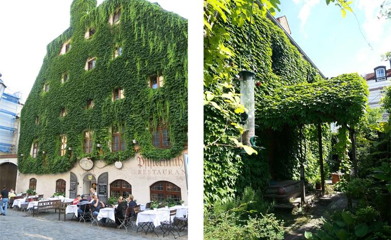 Fassadenbegrünung ist die Lösung für die Großstadt