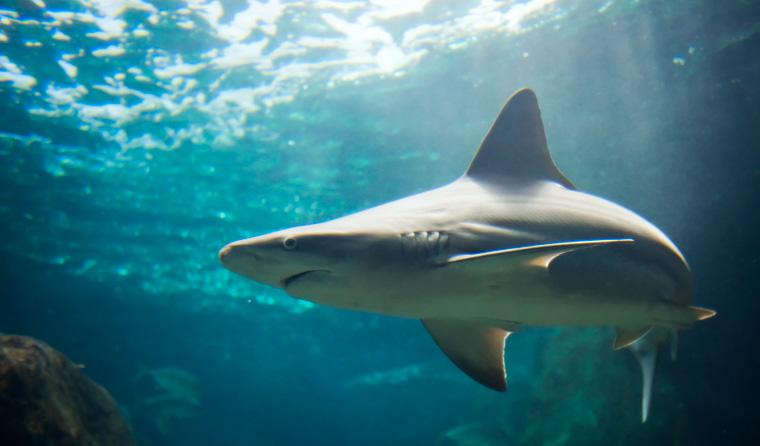 In Australien dürfen Hainetze eingesetzt werden, um Touristen vor Haie zu schützen.