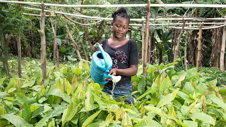 Haiti Baumpflanzaktion