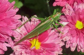 NABU-Statement zum «Aktionsprogramm Insektenschutz»
