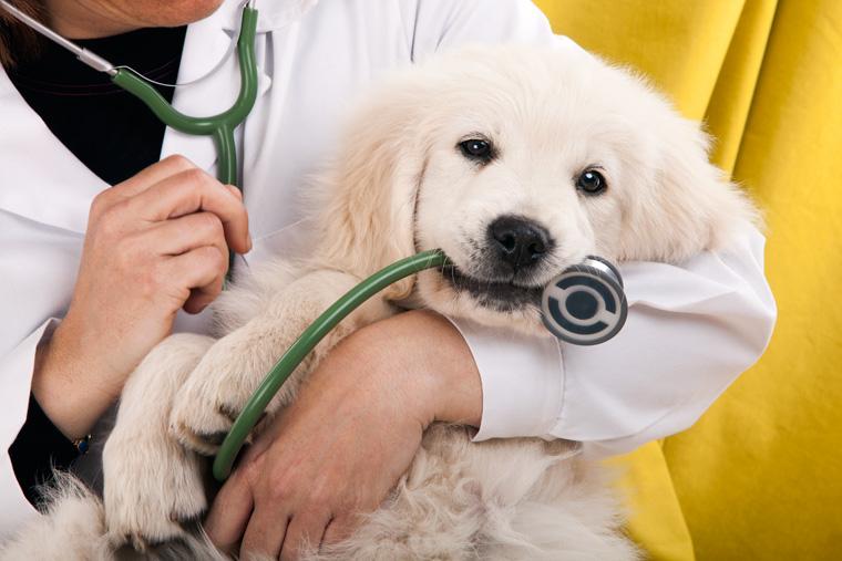 Welttierschutz stellt weltweit kostenlose Online-Kurse für Tierärzte bereit