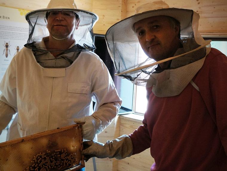 Das Leben der Bienen live beobachten