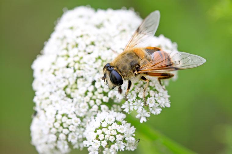 NABU und REWE gemeinsam gegen Insektensterben