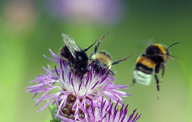 TV-Tipp: Ausgebrummt – Insektensterben in Deutschland
