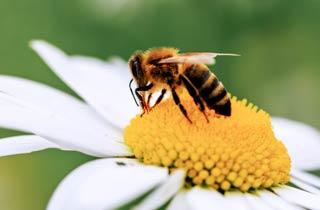 Wirkung von Insektengift Sulfoxaflor bleibt Geheimsache