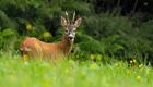 Jagd in NRW wird ökologischer
