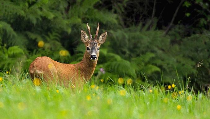 Das neue Jagdgesetz in NRW schützt die Tiere und den Wald
