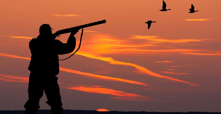 Über 982.000 Tiere und damit circa 26.000 Tiere mehr als im Vorjahreszeitraum sind 2014/2015 von Jägerinnen und Jägern in NRW geschossen worden.