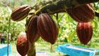 Neues Projekt zum Erhalt der Wälder in Honduras
