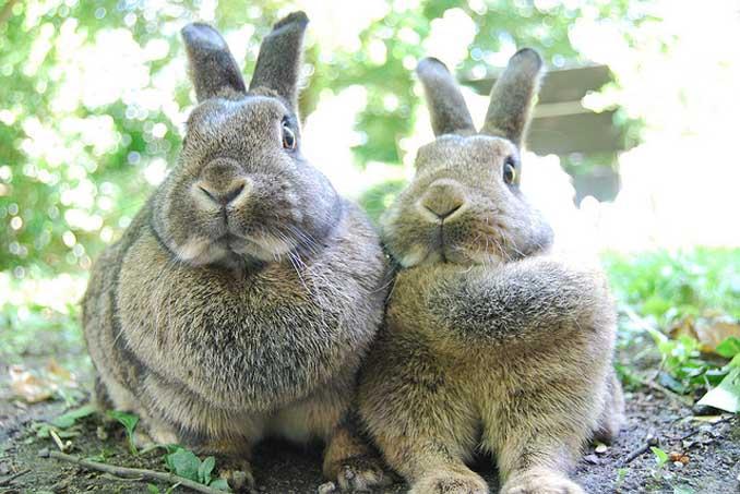 Kaninchenbraten an Ostern weglassen