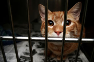 Katze im Käfig gefangen