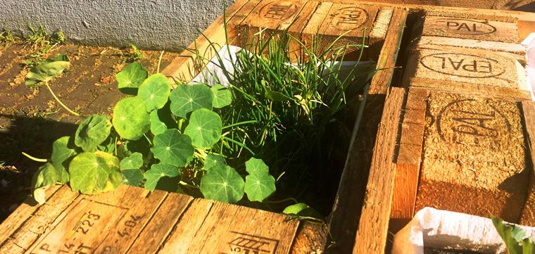 Frisches Saatgut für ein grüneres Bornheim