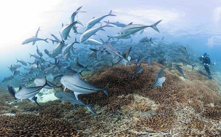 Der stille Überlebenskampf der Korallen