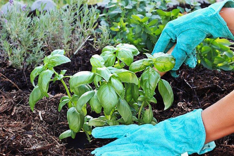 Hauseigener Bio-Gemüsegarten im Essener Rathaus