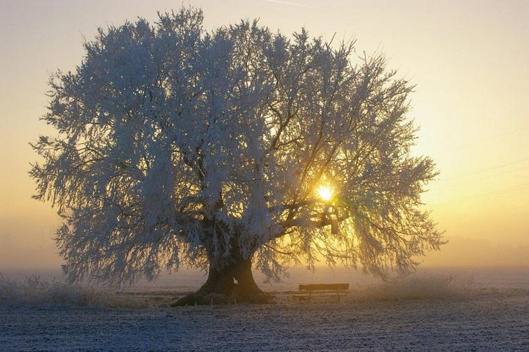 Die schönsten Fotos alter Bäume
