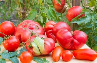 Krummes Obst gewinnt Preisverleihung